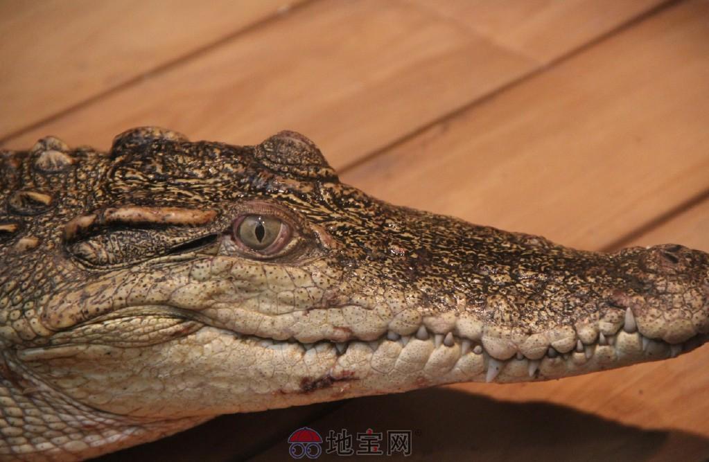 步:新南昌动物园