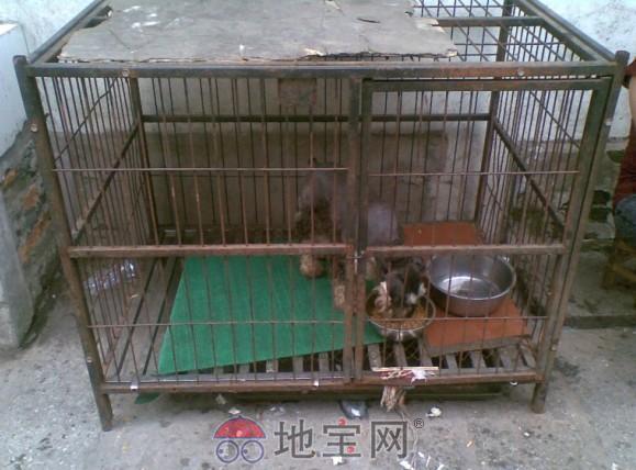狗笼子设计图图片_新开页游   狗笼子设计图图片_新开页游