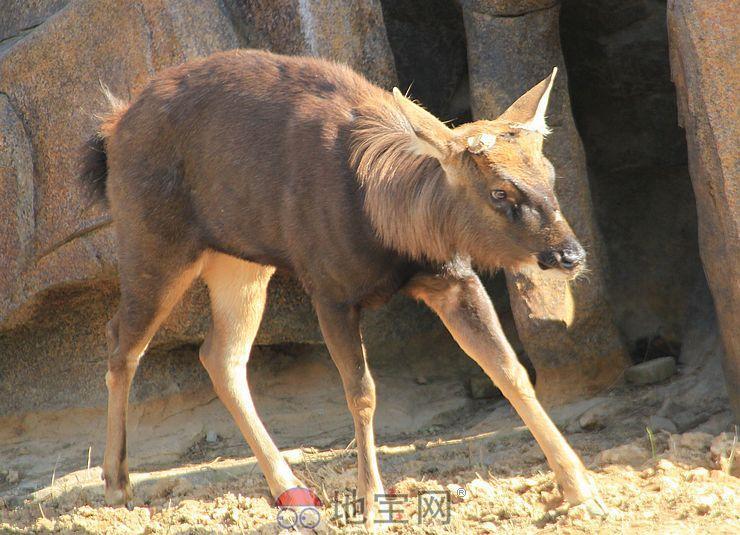 南昌新动物园游玩攻略之草食动物区